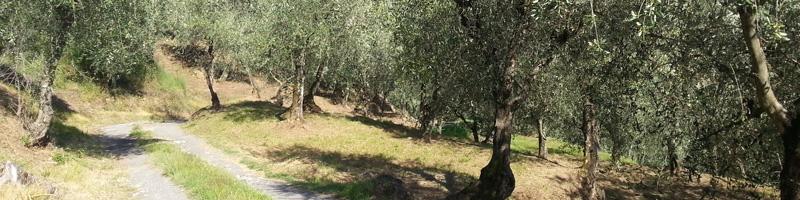 Lucca S Olive Oil Wine